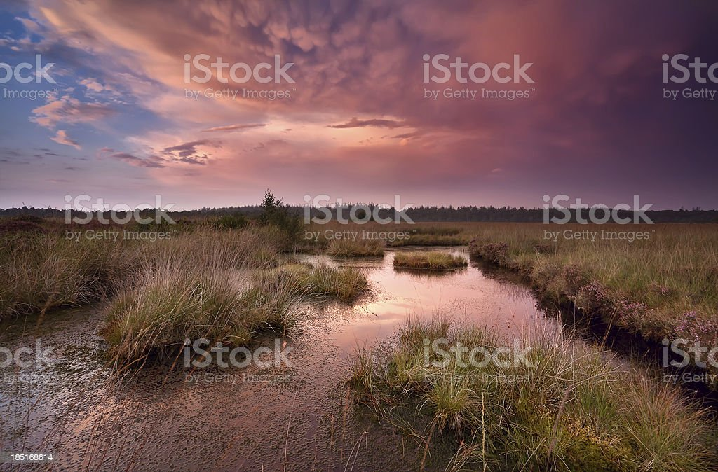 dramatic red sunset over swamp royalty-free stock photo