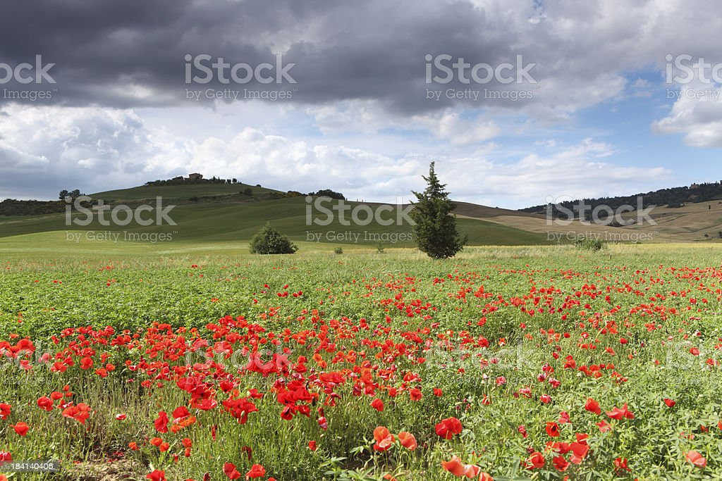 Dramatic sky and meadow in Val d'Orcia, Tuscany Italy royalty-free stock photo