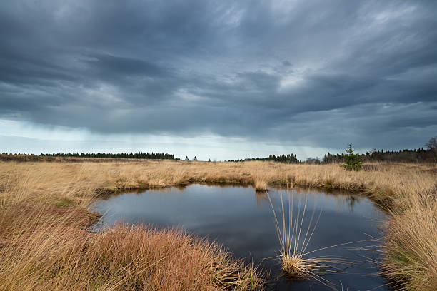 dramatic sky by a pond in national park hautes fagnes . - hohes venn stock-fotos und bilder