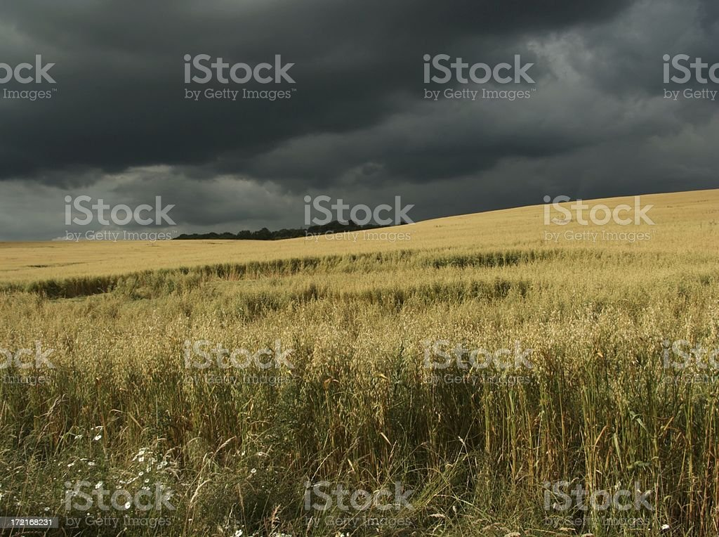 Dramatic sky over crop field royalty-free stock photo