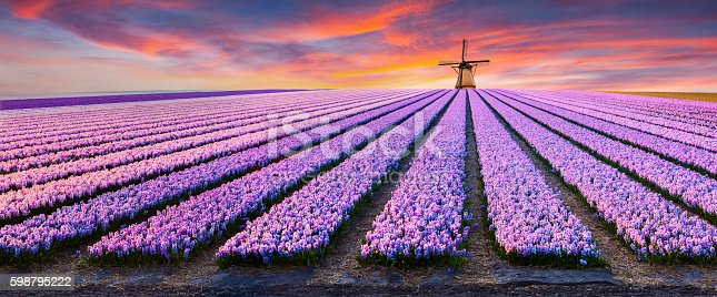 istock Dramatic spring scene on the flowers farm. 598795222