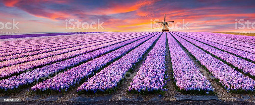Dramatic spring scene on the flowers farm. stock photo
