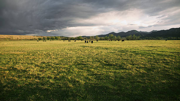 Dramatic Storm Clouds Over Cattle Ranch stock photo