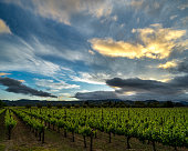 Blue skies, green vines in California wine country