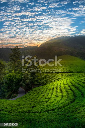 Dramatic sunset sky over beautiful tea gardens on mountain slopes
