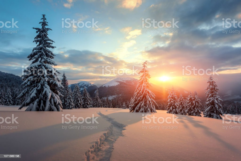 Dramatic wintry scene with snowy trees. stock photo