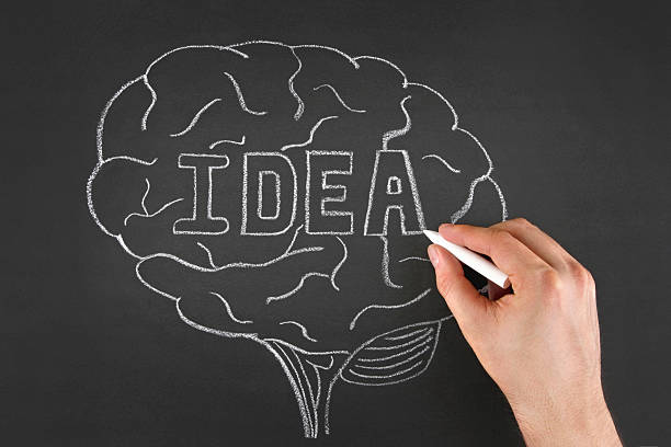 Best Occipital Lobe Stock Photos, Pictures & Royalty-Free ...