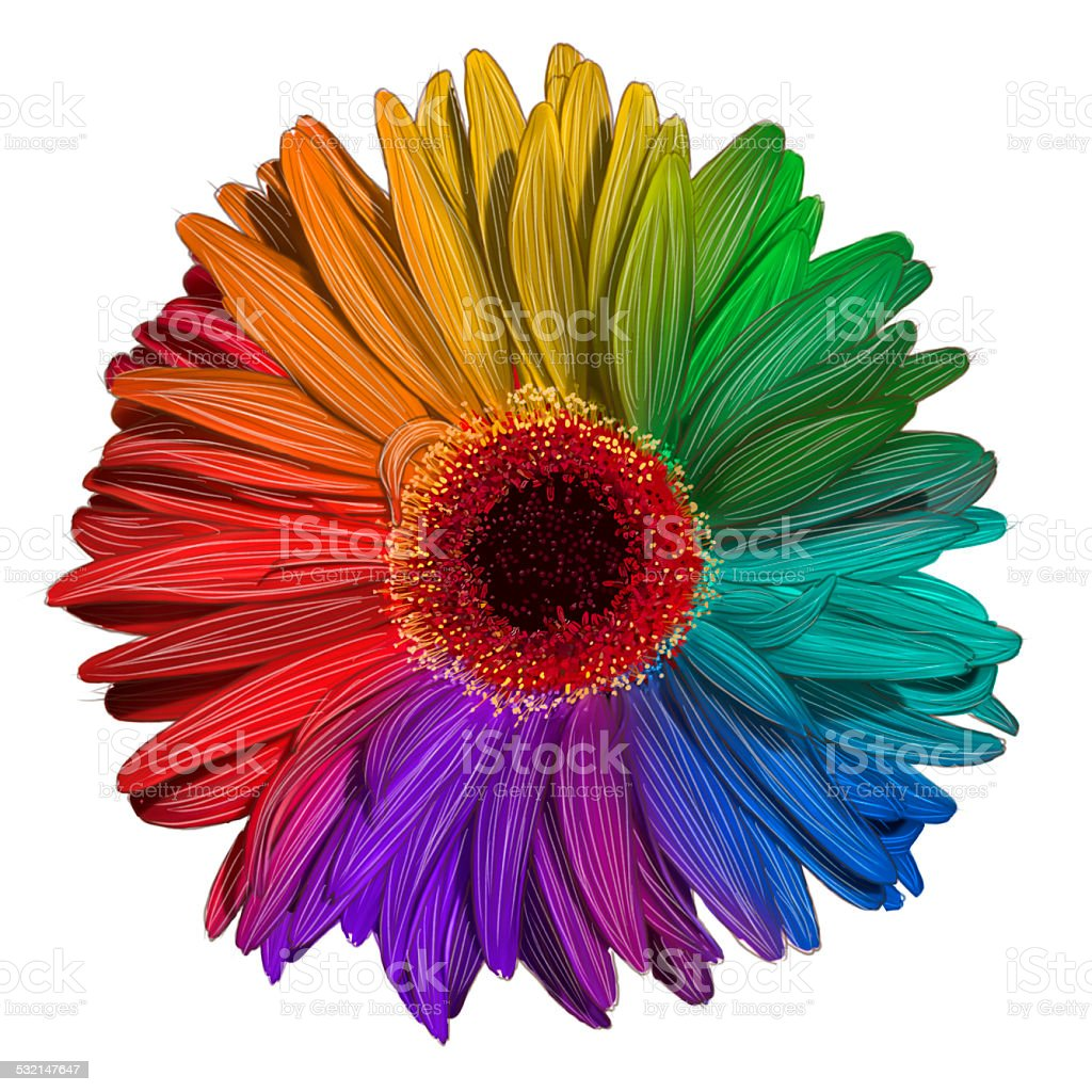 Drawing Of Colorful Gerbera Flower Stock Photo More Pictures Of