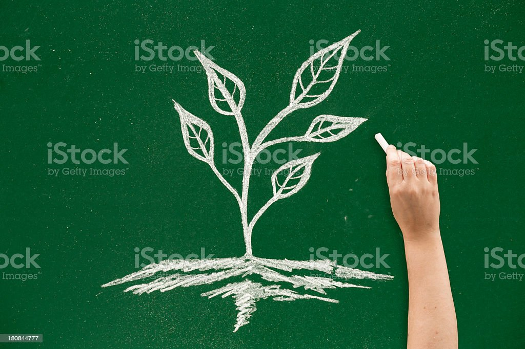 Drawing plant royalty-free stock photo