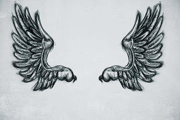 drawn wings - engel zeichnen stock-fotos und bilder