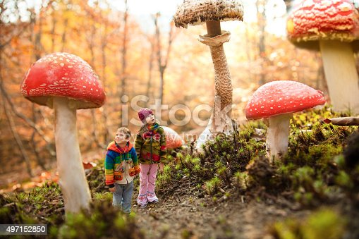 Little girl and little boy walking through the magic forest of giant mushrooms. Children are surprised and looking at the large red and brown mushrooms. Thay are wearing colorful handmade wool jackets.