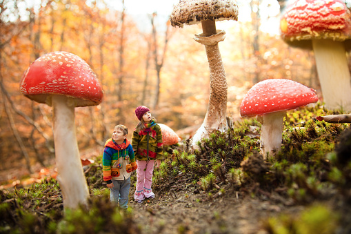 istock Dream about magic mashroom forest 497152850