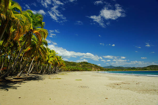 Dream Beach in Costa Rica Beautiful and secluded beach in Samara on Costa Rica's western Coast. The colorful palm trees give a nice contrast to the dark blue sky and white puffs of cloud.  nicoya peninsula stock pictures, royalty-free photos & images