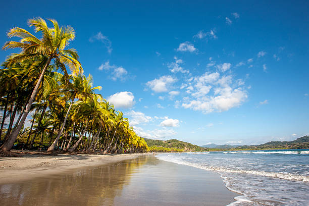 Dream Beach Nicoya Costa Rica Beautiful natural tropical dream beach surrounded with palm trees under blue summer sky. Nicoya Peninsula, Costa Rica, Central America. nicoya peninsula stock pictures, royalty-free photos & images