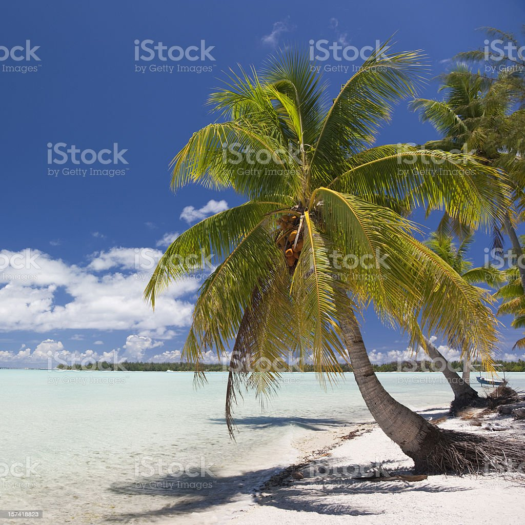 Dream Beach royalty-free stock photo