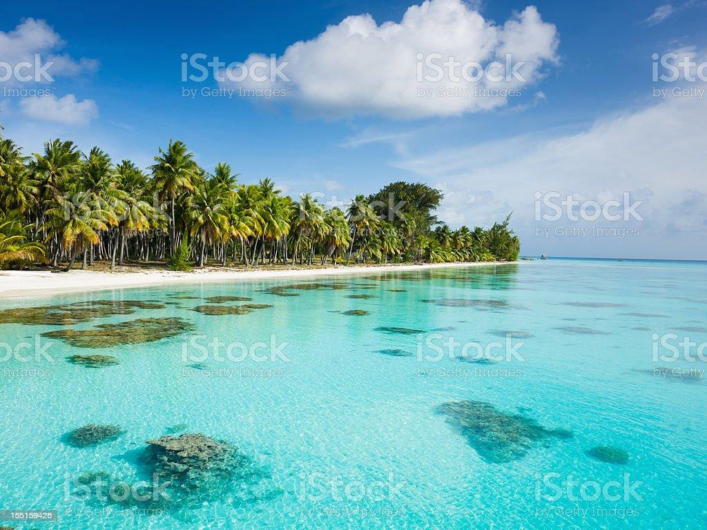 Dream Beach under Palm Trees Fakarava French Polynesia stock photo