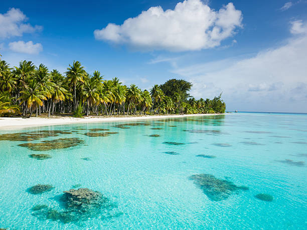 Dream Beach under Palm Trees Fakarava French Polynesia  south pacific ocean stock pictures, royalty-free photos & images