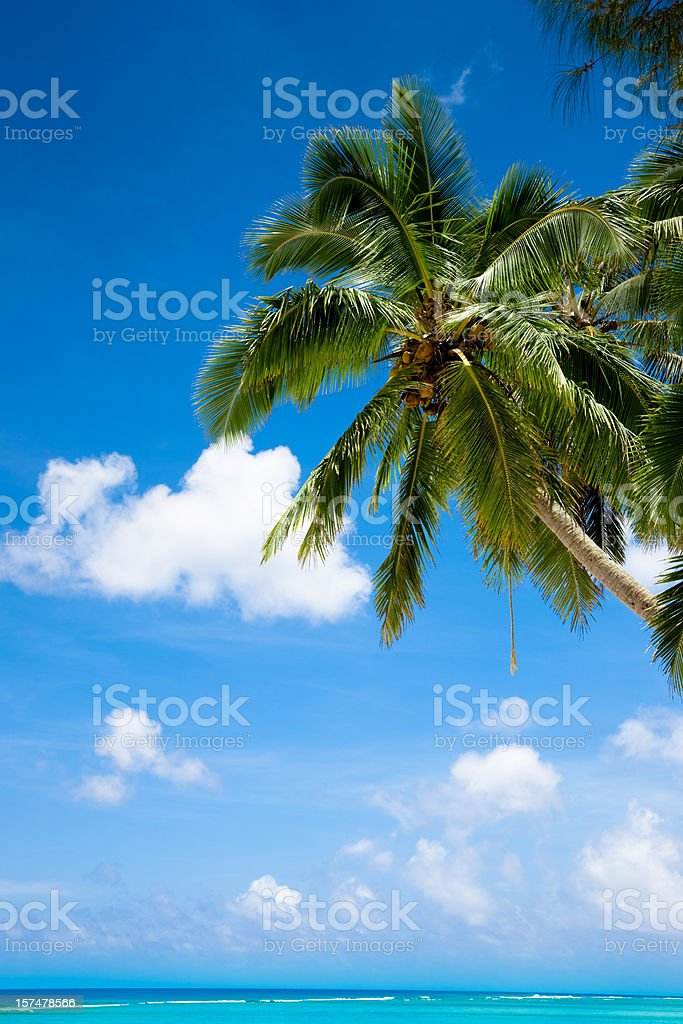 Dream Holidays under Palm Trees royalty-free stock photo