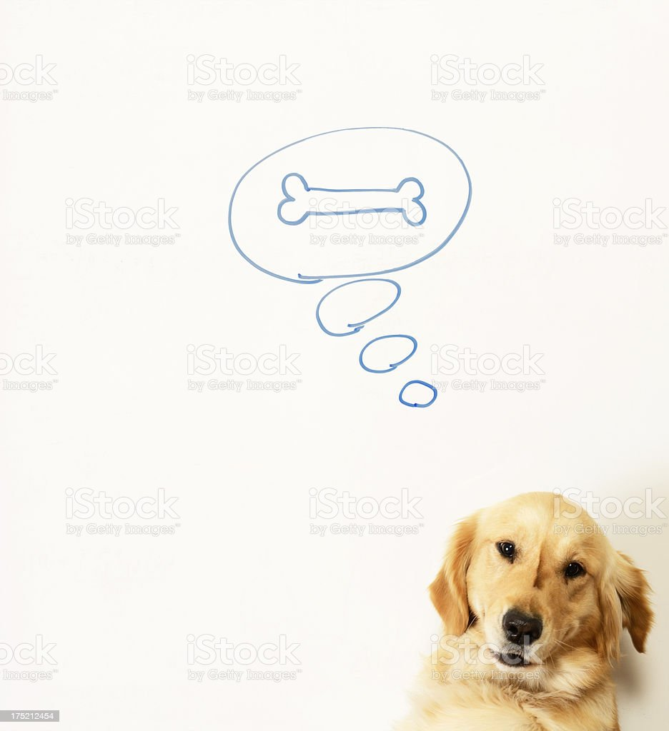 Dream of a dog. royalty-free stock photo