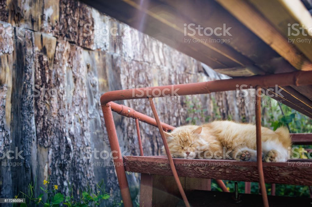 Dream of a red cat. stock photo
