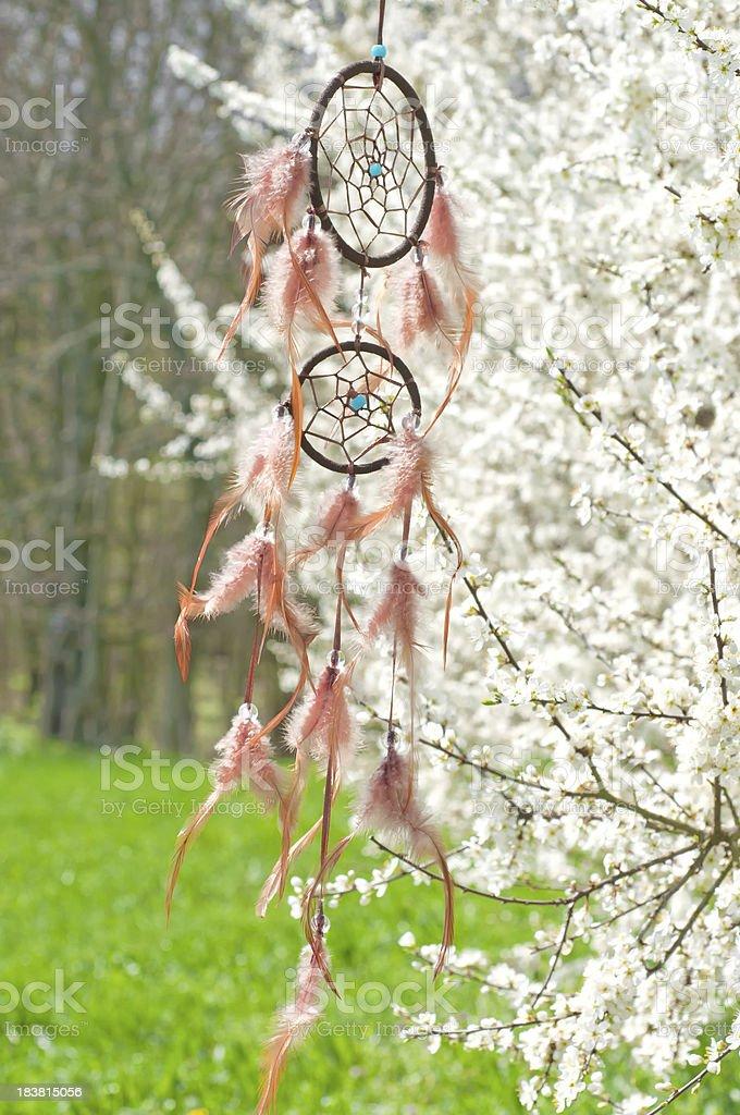 Porte-bonheur indien dans Prunellier bush - Photo