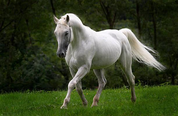 dreamhorse - farbe gegen schimmel stock-fotos und bilder