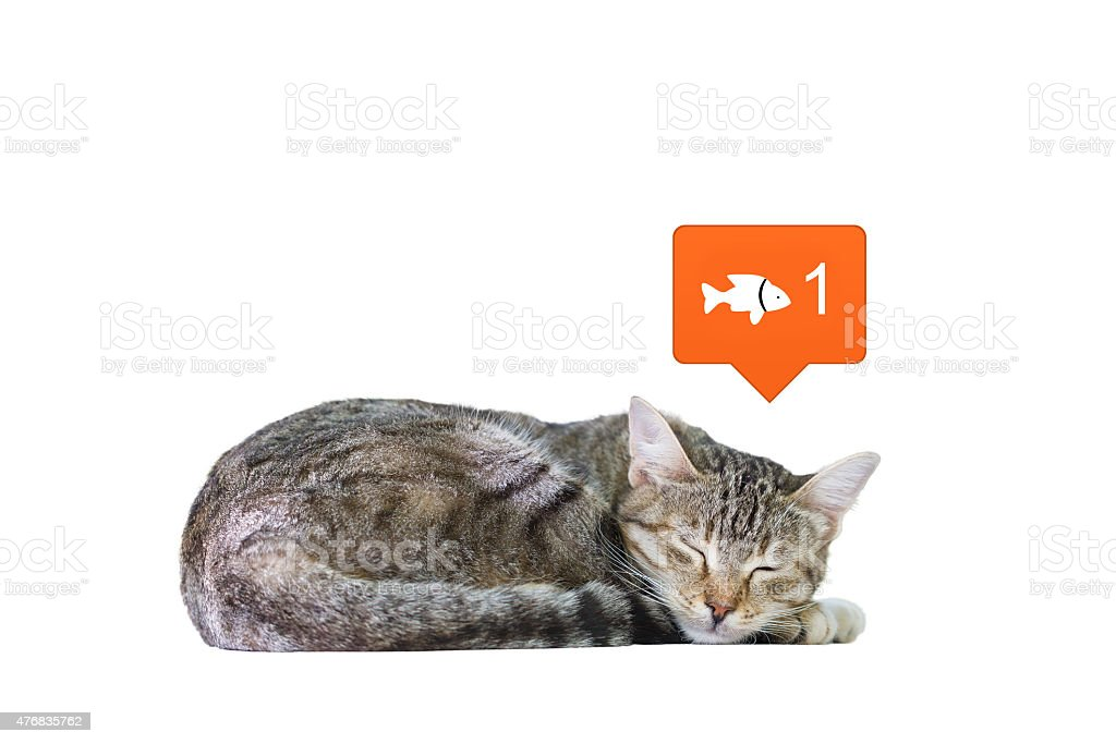 Dreaming Cat stock photo