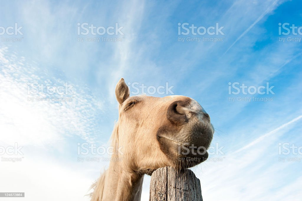 Dreaming horse stock photo
