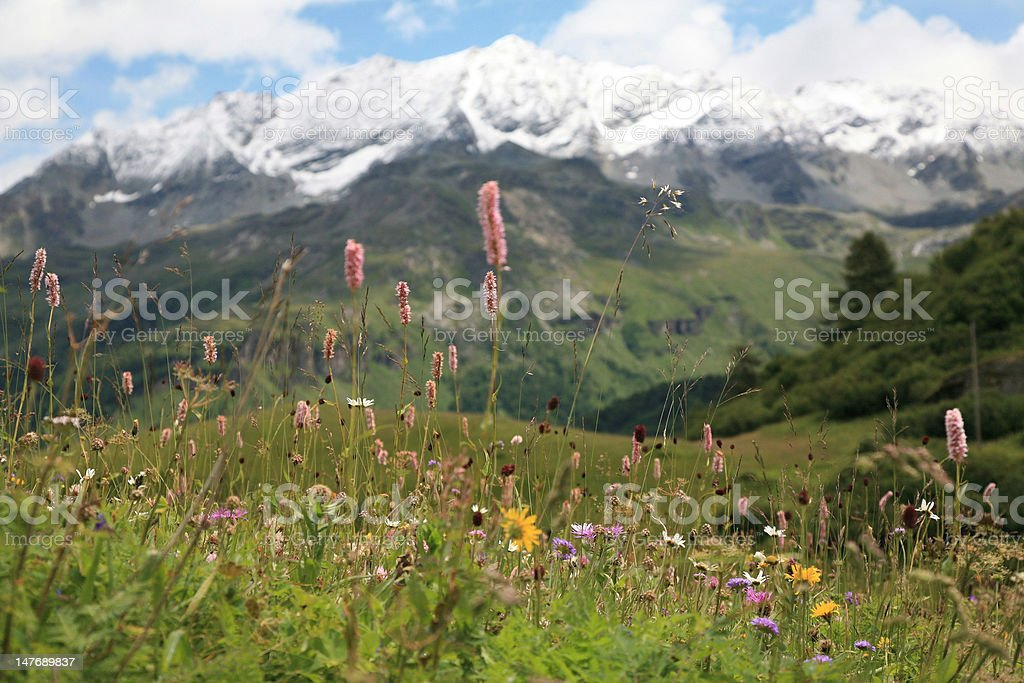 Dreaming in the middle of wild flowers royalty-free stock photo
