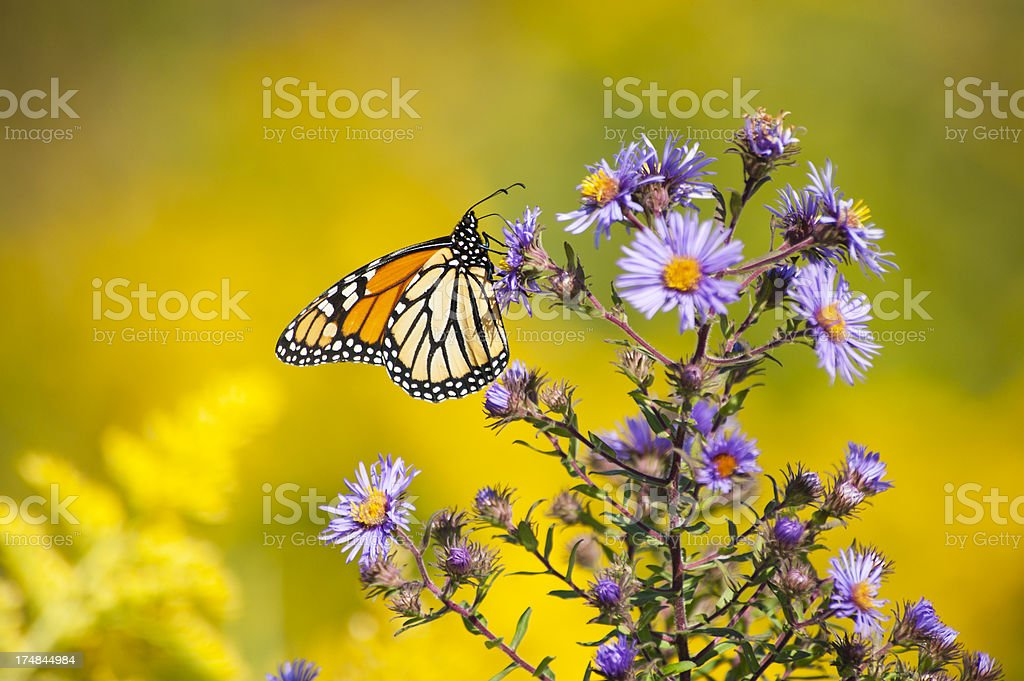 Dreaming of Summer royalty-free stock photo