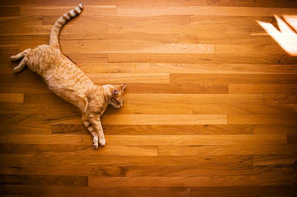 Dreaming orange cat picture id153737633?b=1&k=6&m=153737633&s=612x612&w=0&h=bivuftqkjtr8z7osoq5vnsqwkivnuuxocciswiu yzk=