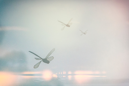 A Dream like double exposure of a dragonfly.