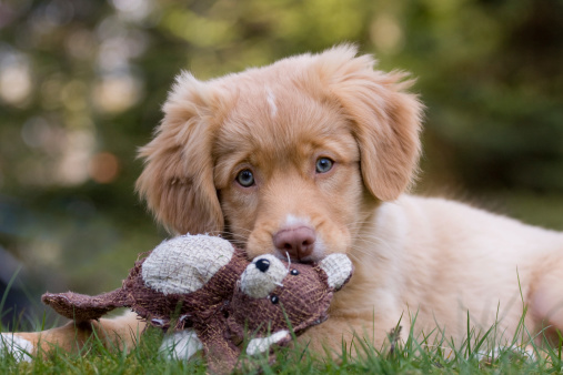 Dreaming Puppy Stock Photo - Download Image Now