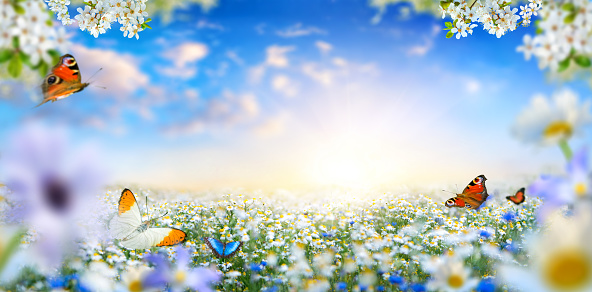 Dreamland fantasy landscape with a meadow covered by spring flowers and butterflies flying towards the sun in the blue morning sky