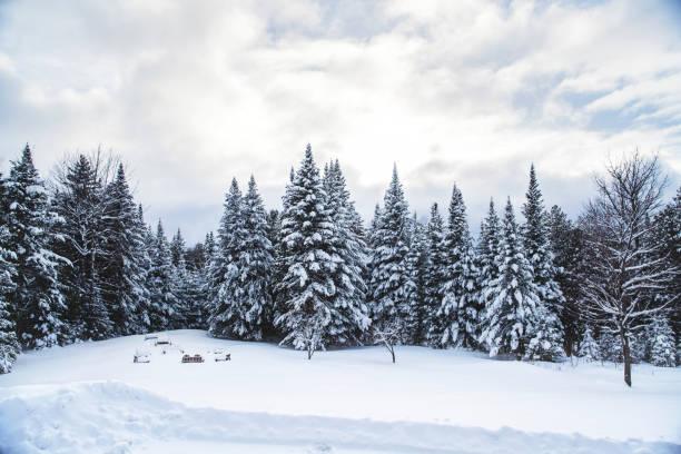 drömlik gårdsplanen från skogen av vermont - snötäckt bildbanksfoton och bilder