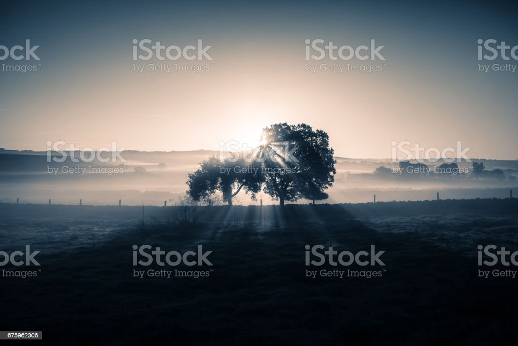 Dreamy and misty rural landscape. Cold blue light. stock photo