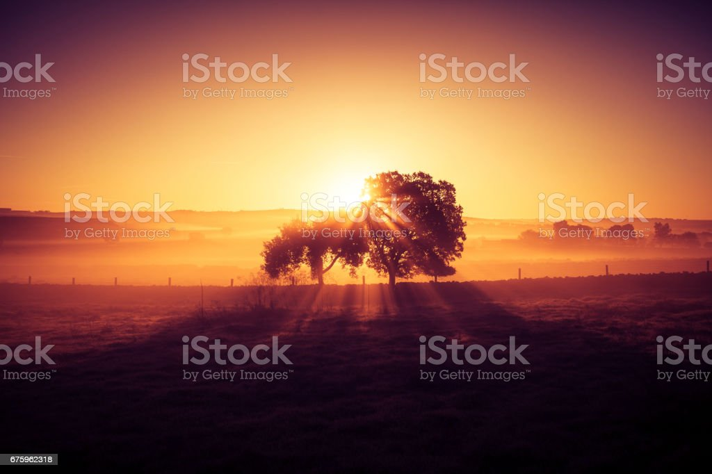 Dreamy and misty rural landscape. Dawn light. stock photo
