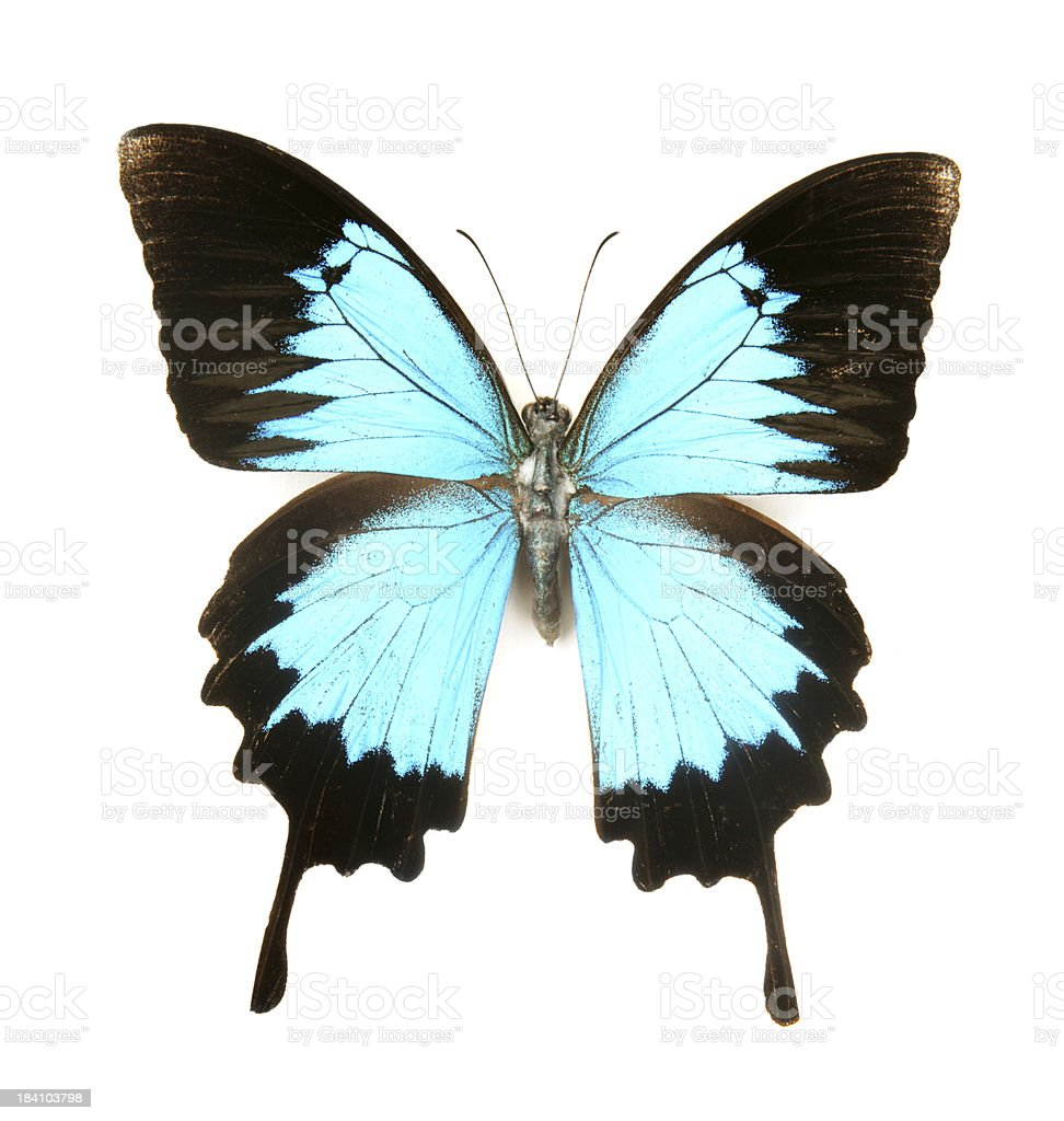 Dreamy Blue Butterfly royalty-free stock photo