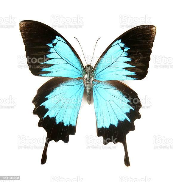 Dreamy blue butterfly picture id184103798?b=1&k=6&m=184103798&s=612x612&h=015o90flxm5xd4pf1rryuqhuxullau3w8mheg83atim=
