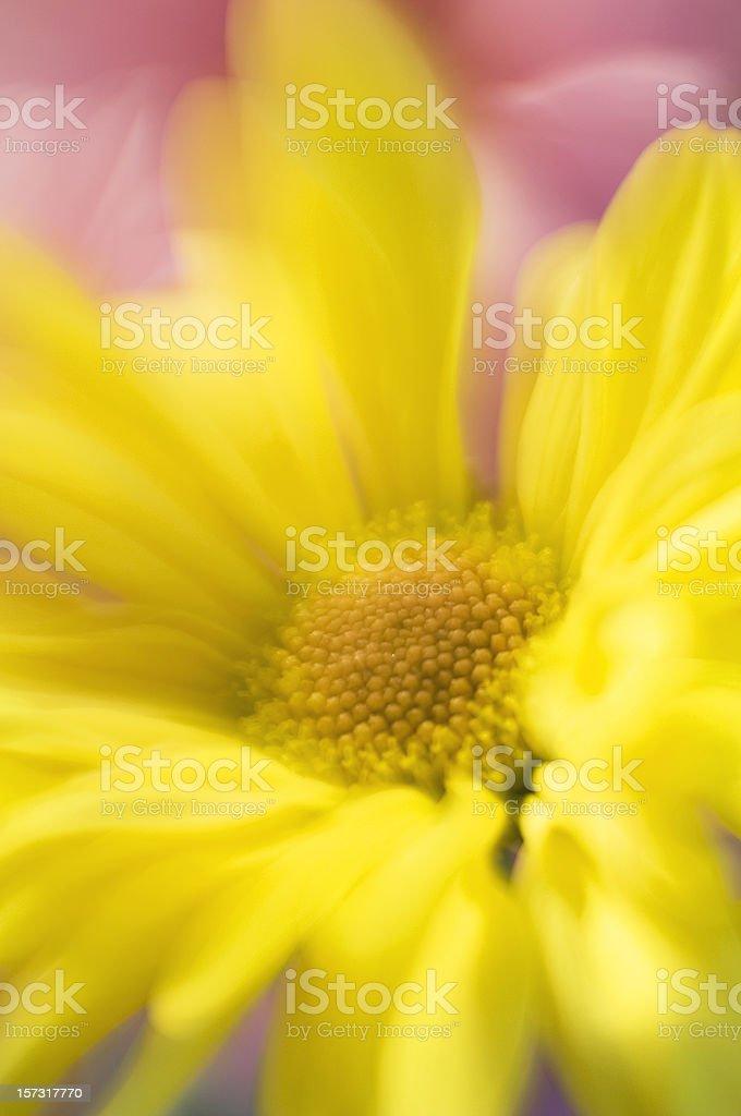 Dreamy Flower royalty-free stock photo