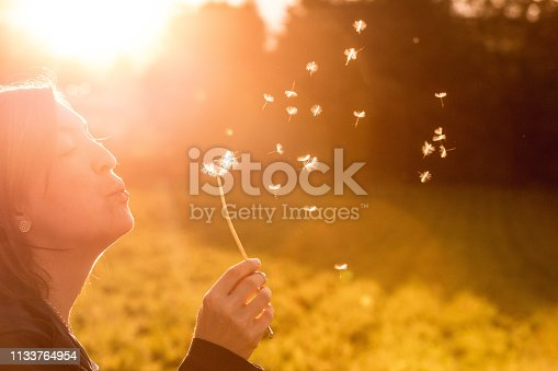Cut out of a young woman which is blowing dandelion in the evening sun