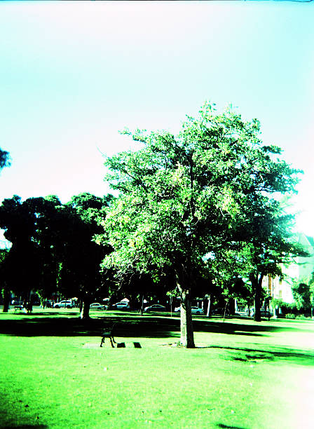 Dreamy Landscape- Tree and a Bench in City Parklands stock photo