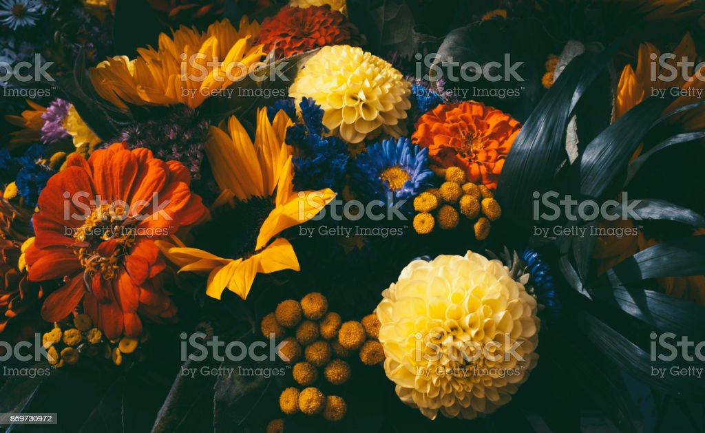 Dreamy magic autumn flowers. stock photo