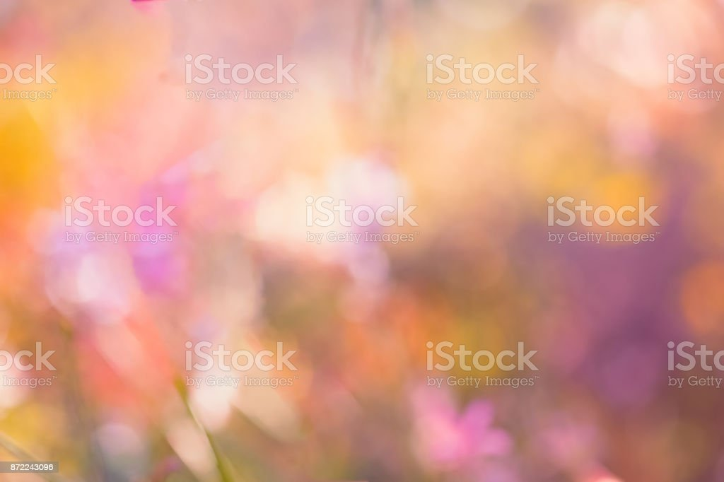 Dreamy Nature Background Of Soft Pink Bokeh From Garden Plants stock photo