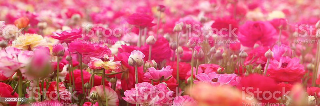 dreamy photo with low angle of spring flowers. stock photo