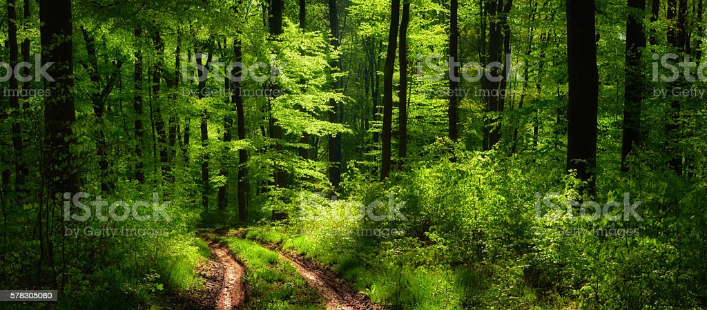Dreamy scenery in the forest stock photo