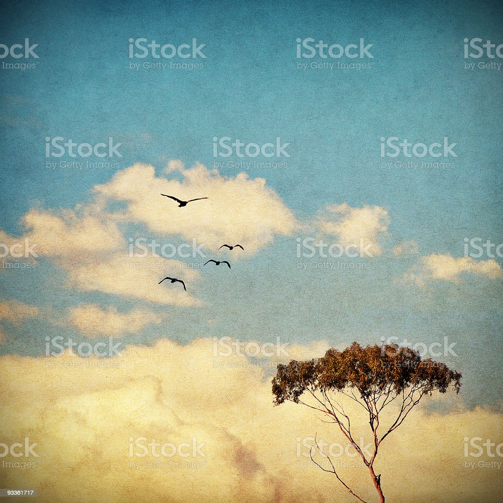 Dreamy Sky and Tree stock photo