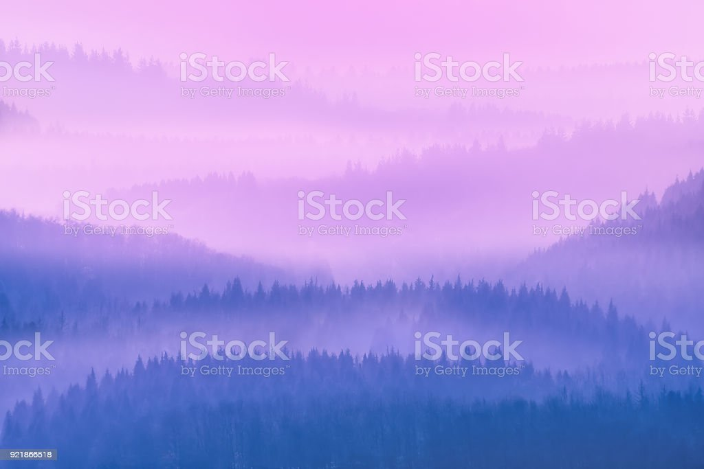 dreamy trees silhouettes at morning stock photo