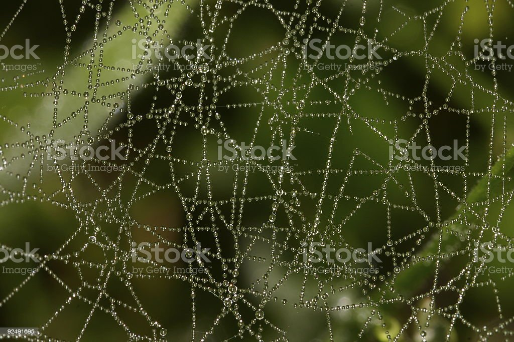 Dreamy web with dew drops #2 royalty-free stock photo