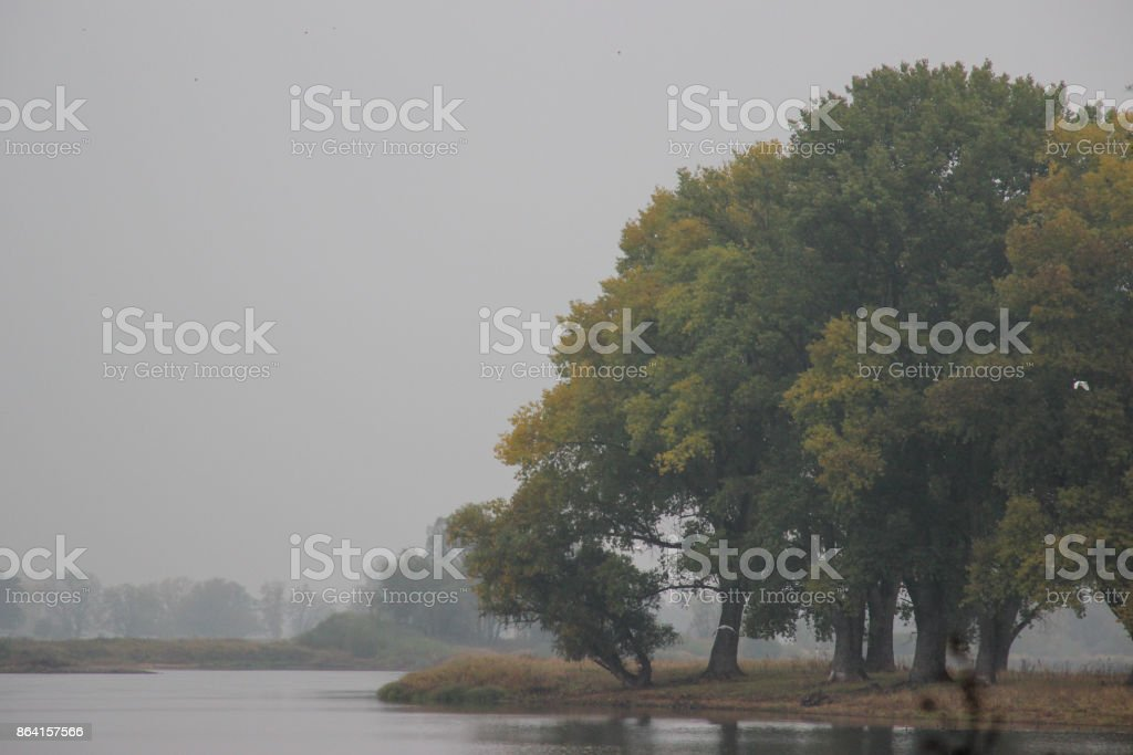 dreary foggy autumn landscape royalty-free stock photo
